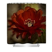 The Red Torch  Shower Curtain