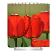 The Red Tulips Shower Curtain