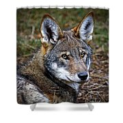 The Red Wolf Shower Curtain