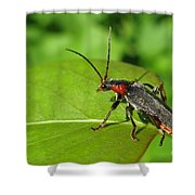 The Rednecked Bug- Close Up Shower Curtain