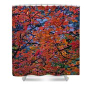 The Reds Of Autumn  Shower Curtain