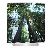The Redwood Giants Shower Curtain