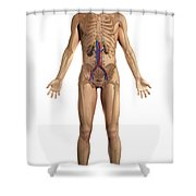The Renal System Male Shower Curtain
