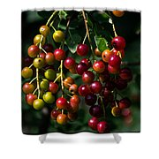 The Ripening Shower Curtain