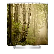 The Road Through The Woods Shower Curtain