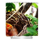 The Robins Nest Shower Curtain