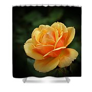 The Rose 1 Shower Curtain