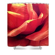 The Rose 5 Shower Curtain