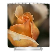 The Rose Bud Shower Curtain