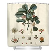 The Rose Coloured Clusia Shower Curtain
