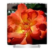 The Rose Of Joy Shower Curtain