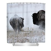 The Rowdies Shower Curtain