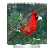 The Santa Bird Shower Curtain