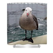 The Seagull 2 Shower Curtain