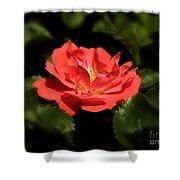 The Secret Rose Shower Curtain