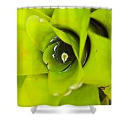 The Secret World In A Bromeliad Shower Curtain by Karon Melillo DeVega