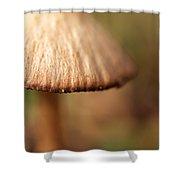 The Secret World Of Shroooms Shower Curtain