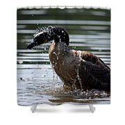The Shake Off - Canadian Goose Shower Curtain