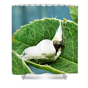 The Shy Cockatoo Shower Curtain