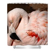 The Shy Flamingo Shower Curtain
