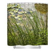 The Side Of The Lily Pond Shower Curtain