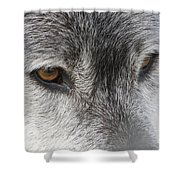 The Silver Gleam Shower Curtain