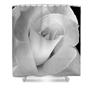 The Silver Rose In Portrait Shower Curtain