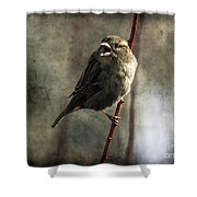 The Singing Sparrow Shower Curtain