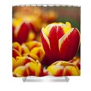 The Single Big Tulip Shower Curtain