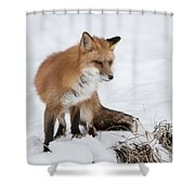 The Sly One Shower Curtain
