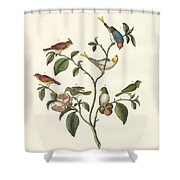 The Smallest Birds Shower Curtain