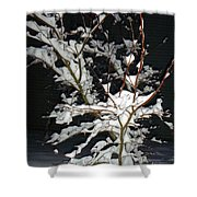 The Snowy Tree Shower Curtain
