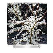 The Snowy Tree II Shower Curtain
