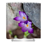 The Softness Of Crocus - Flowers - Spring Shower Curtain