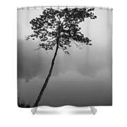 The Solitary Tree Shower Curtain