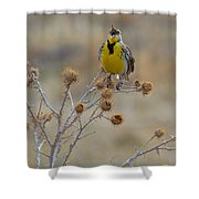 The Song Of The Lark Shower Curtain