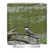The Southern Kingfisher Side View Shower Curtain