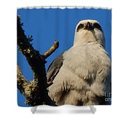 New Orleans  Southern Osprey Shower Curtain