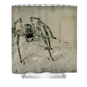 The Spider Series Xi Shower Curtain