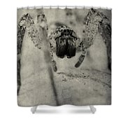 The Spider Series Xii Shower Curtain