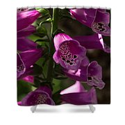 The Splendor Of Foxgloves Shower Curtain