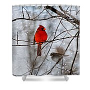 Blue Eyes In The Snow Cardinal  Shower Curtain