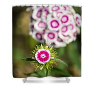 The Star - Beautiful Spring Dianthus Flowers In Bloom. Shower Curtain