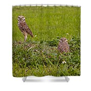 The Stares Of The Burrowing Owls Shower Curtain