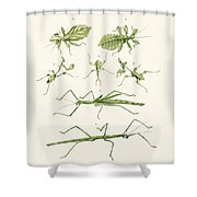 The Stick Insect Shower Curtain