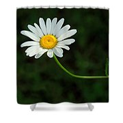 The Sun Is Better Over Here Shower Curtain