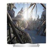 The Sun Through Snowy Branches Shower Curtain