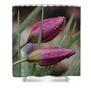 The Sun Will Come Out Tomorrow Shower Curtain