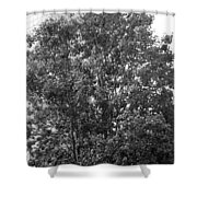 The Survivor Tree In Black And White Shower Curtain