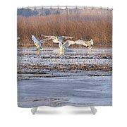 The Swans Return Shower Curtain